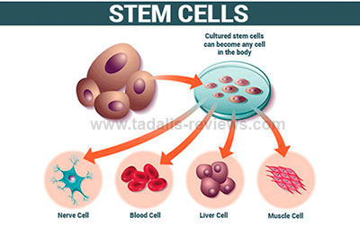 Erectile Dysfunction Treatment Using Stem Cells
